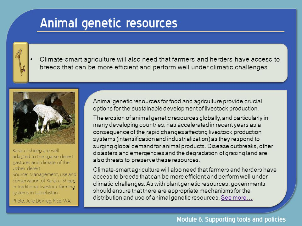Animal genetic resources