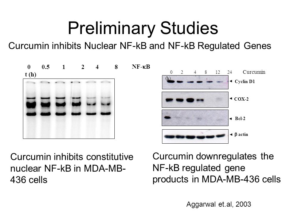 Curcumin inhibits Nuclear NF-kB and NF-kB Regulated Genes