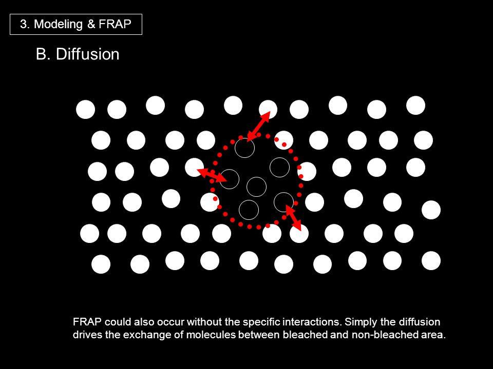 B. Diffusion 3. Modeling & FRAP