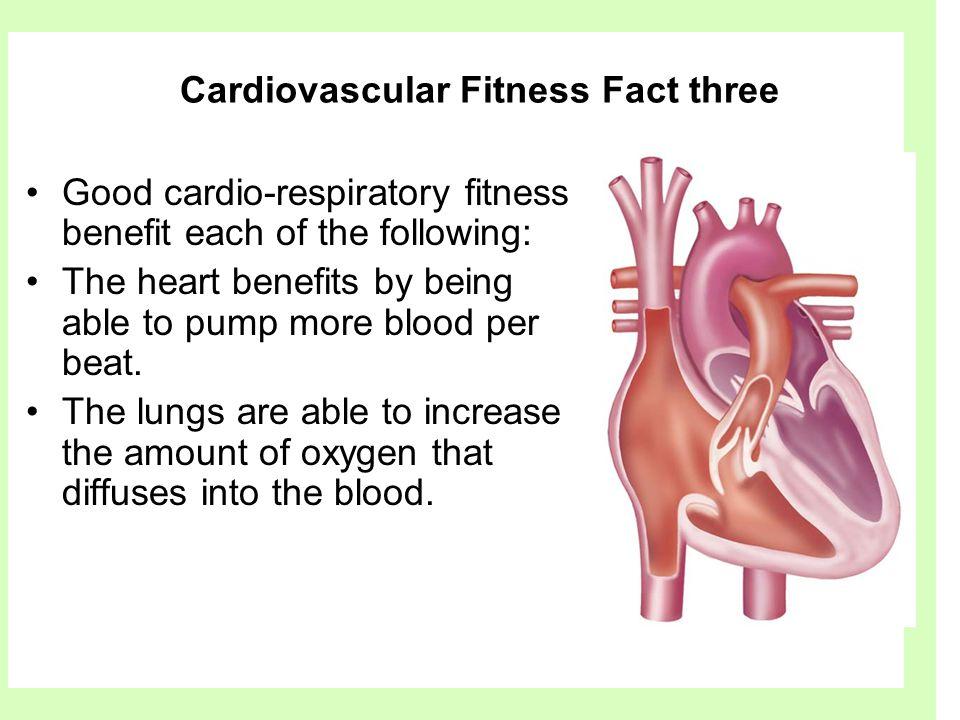 Cardiovascular Fitness Fact three