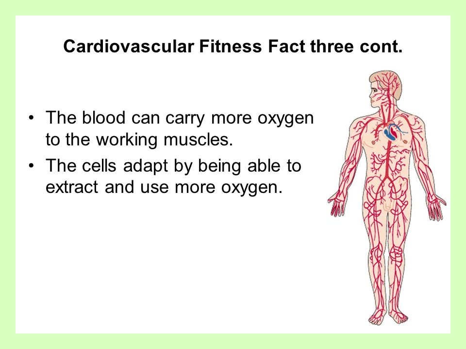 Cardiovascular Fitness Fact three cont.