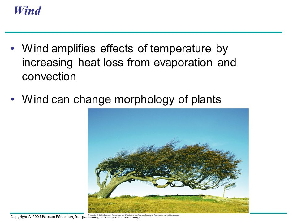 Wind Wind amplifies effects of temperature by increasing heat loss from evaporation and convection.