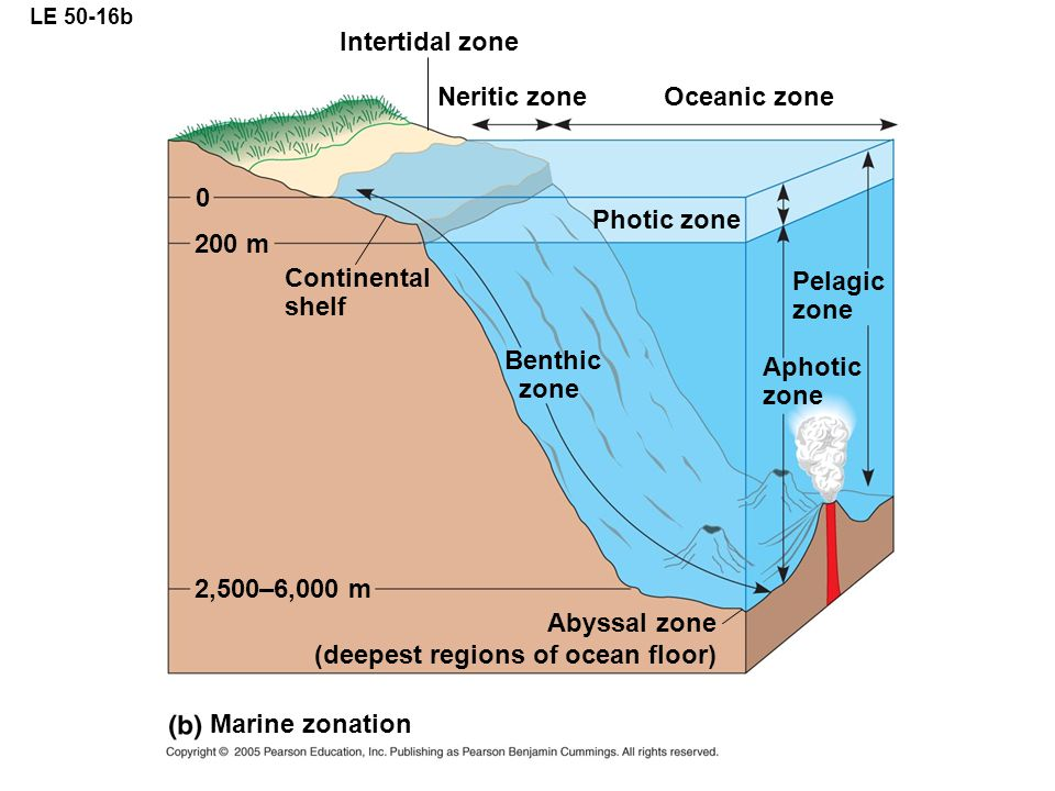 (deepest regions of ocean floor)