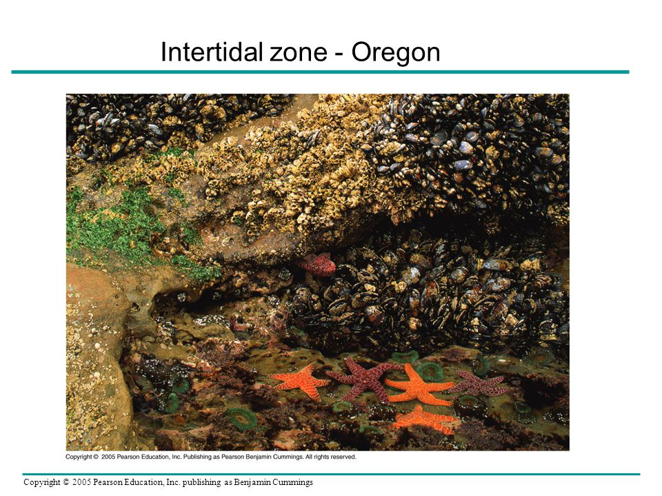 Intertidal zone - Oregon