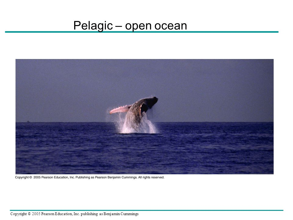 Pelagic – open ocean
