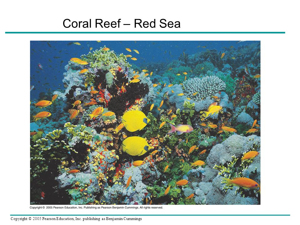 Coral Reef – Red Sea