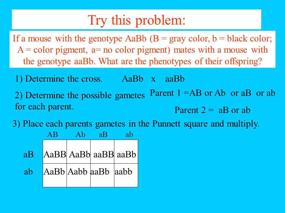 Parent 1 =AB or Ab or aB or ab