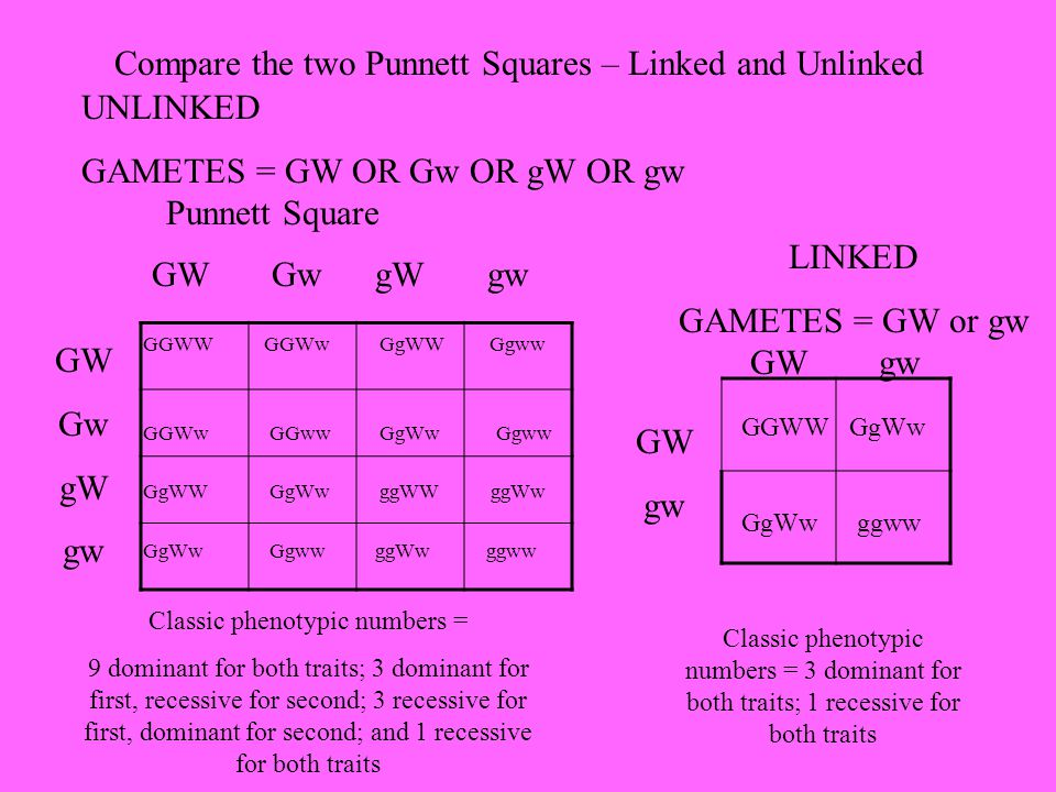 Compare the two Punnett Squares – Linked and Unlinked UNLINKED