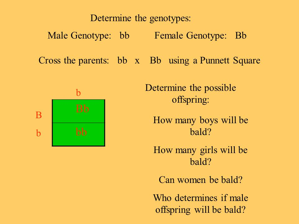 Bb bb Determine the genotypes: Male Genotype: bb Female Genotype: Bb