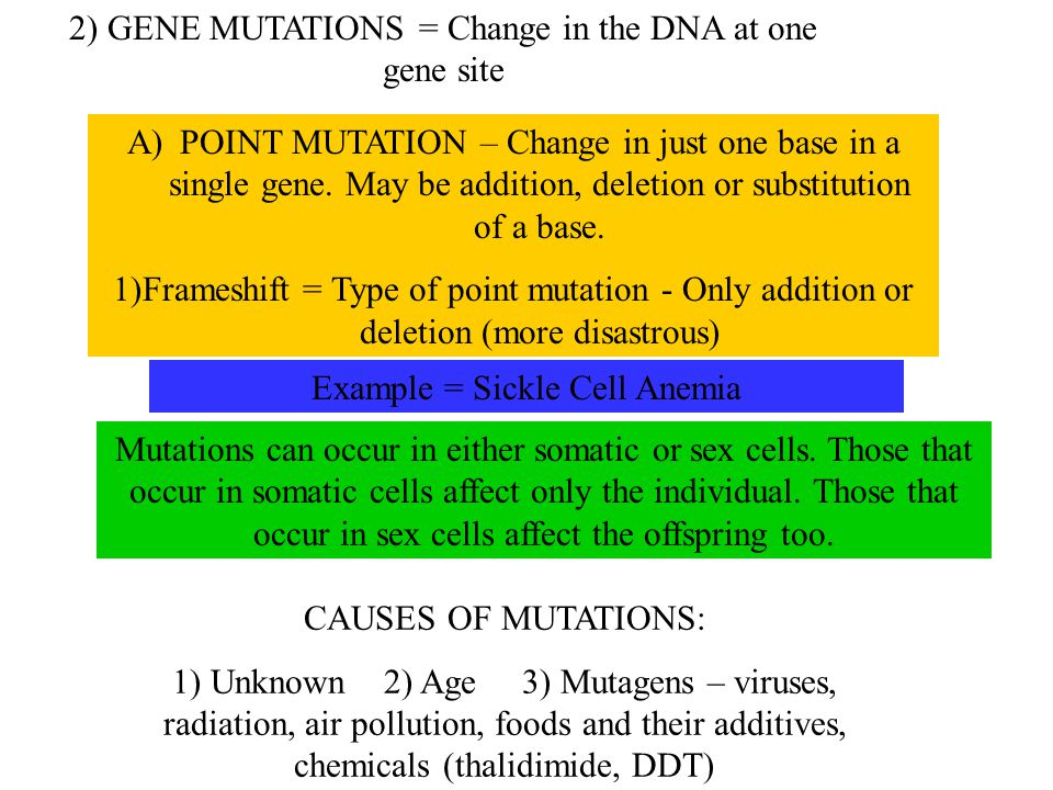 2) GENE MUTATIONS = Change in the DNA at one gene site