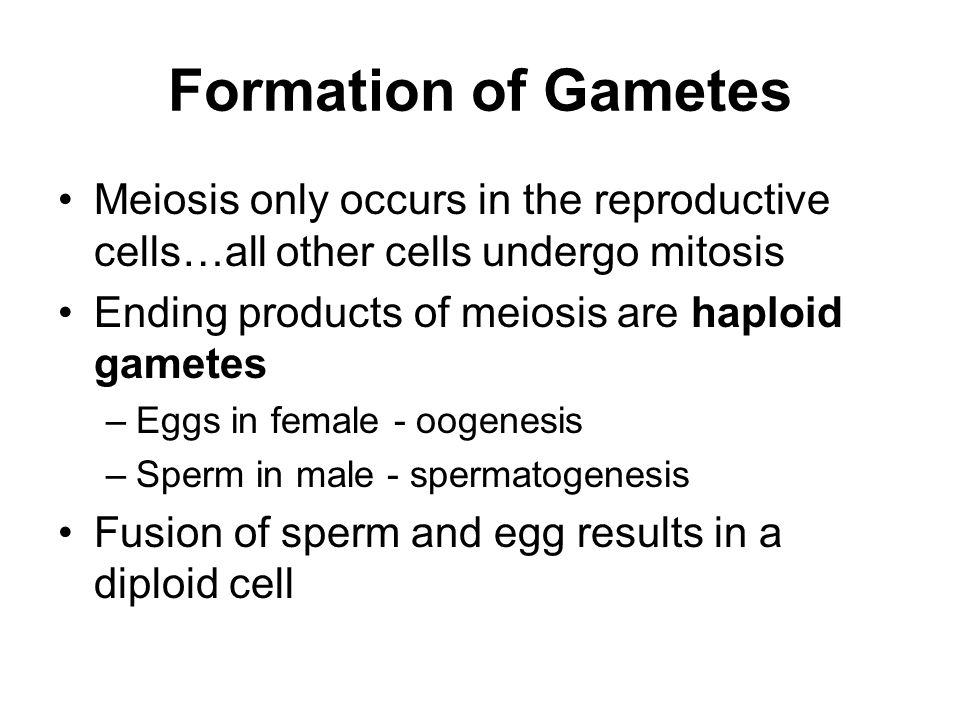 Formation of Gametes Meiosis only occurs in the reproductive cells…all other cells undergo mitosis.