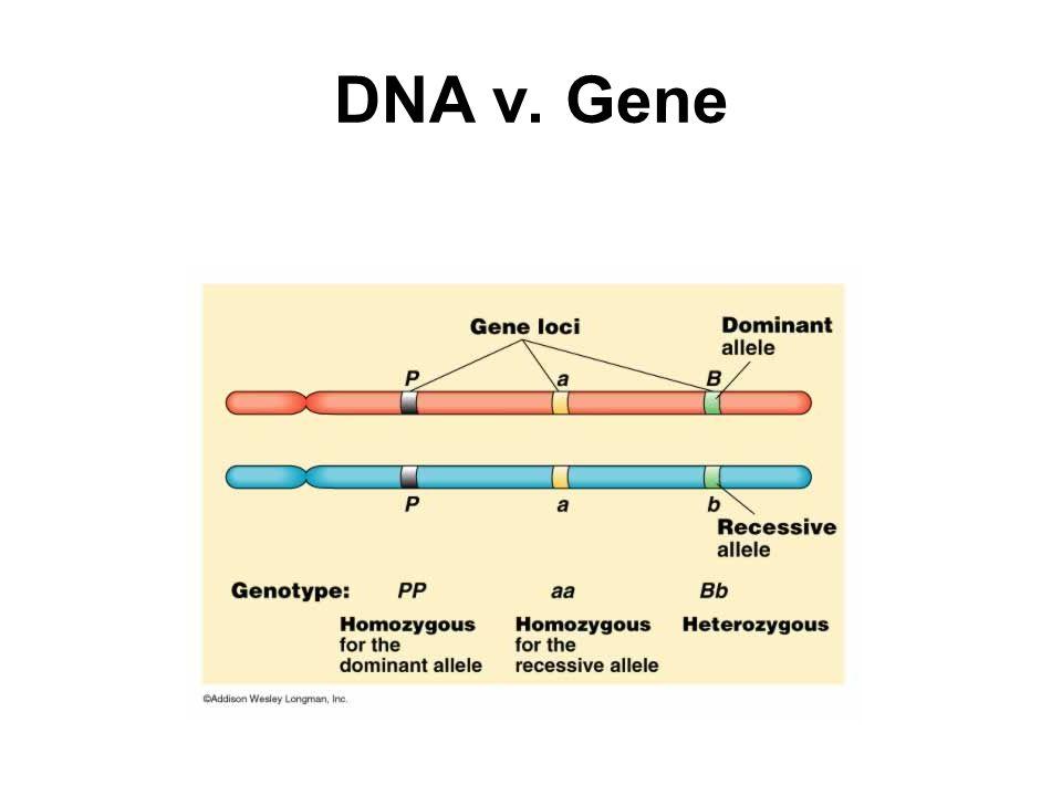 DNA v. Gene