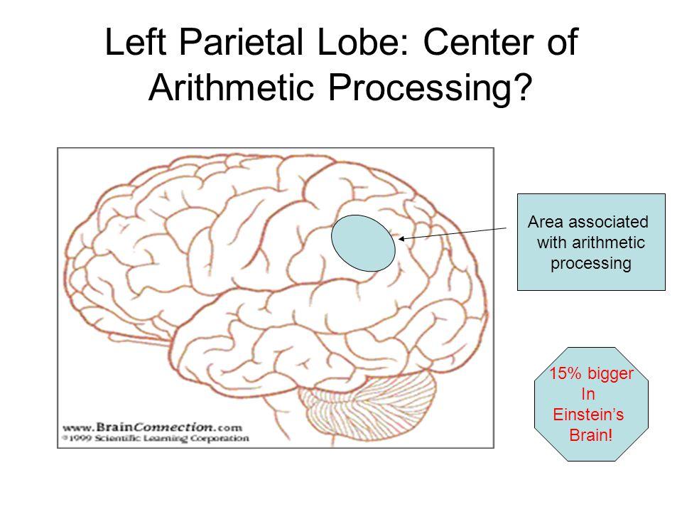 Left Parietal Lobe: Center of Arithmetic Processing