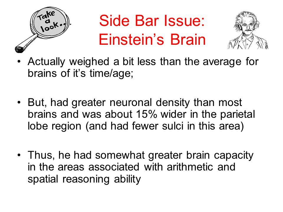 Side Bar Issue: Einstein's Brain
