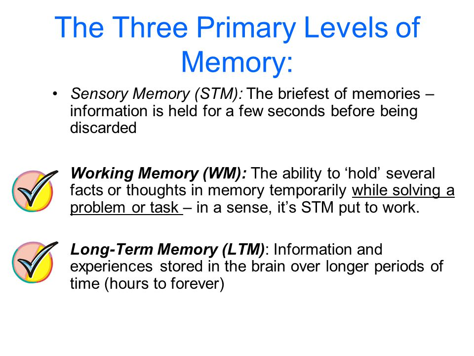 The Three Primary Levels of Memory: