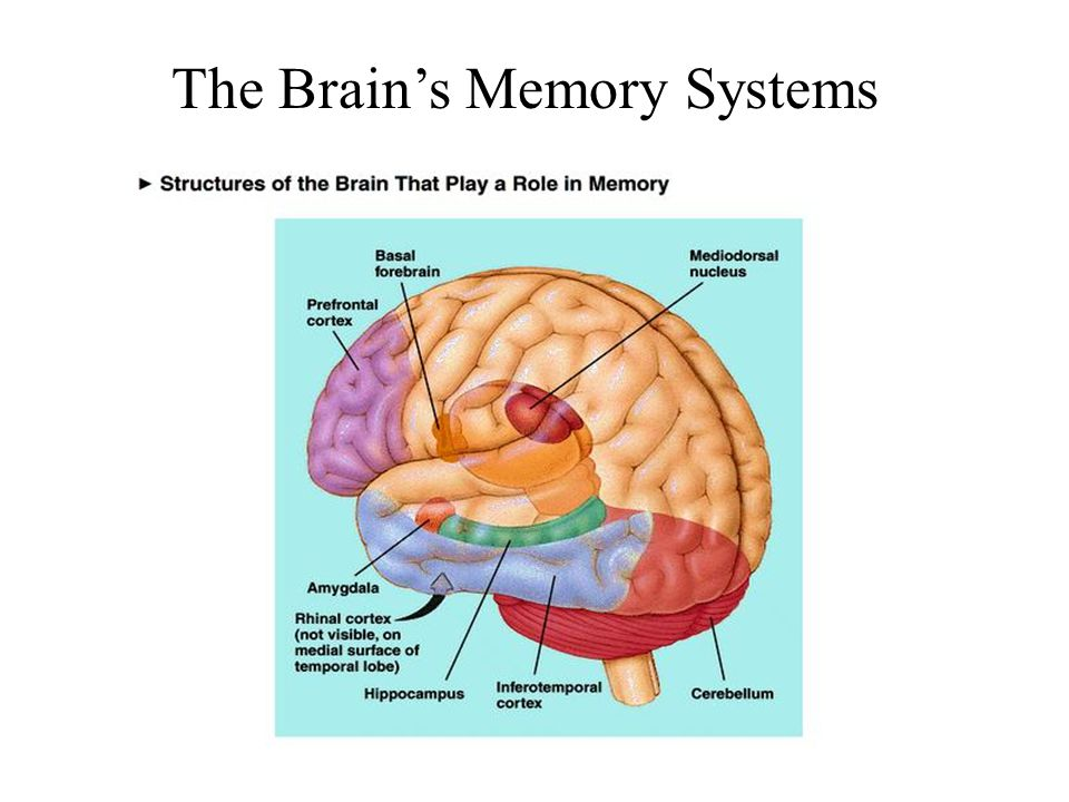 The Brain's Memory Systems
