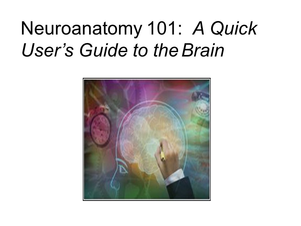 Neuroanatomy 101: A Quick User's Guide to the Brain