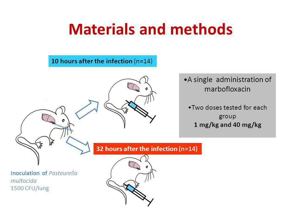 Materials and methods A single administration of marbofloxacin