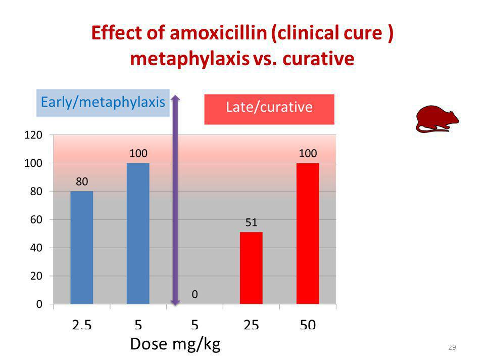 Effect of amoxicillin (clinical cure ) metaphylaxis vs. curative