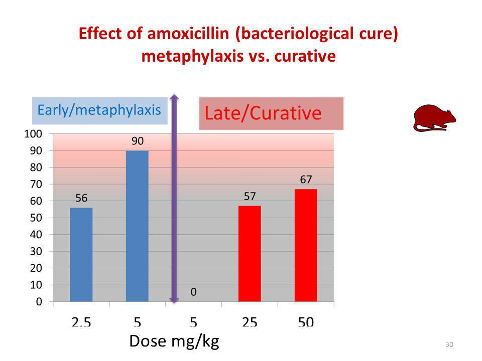 Effect of amoxicillin (bacteriological cure) metaphylaxis vs. curative