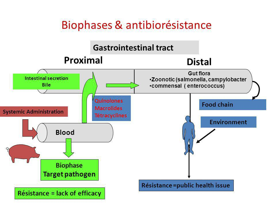 Biophases & antibiorésistance