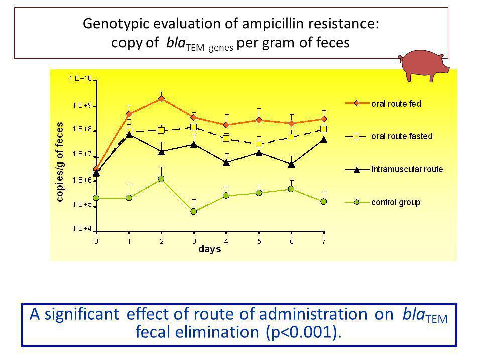 Genotypic evaluation of ampicillin resistance: copy of blaTEM genes per gram of feces