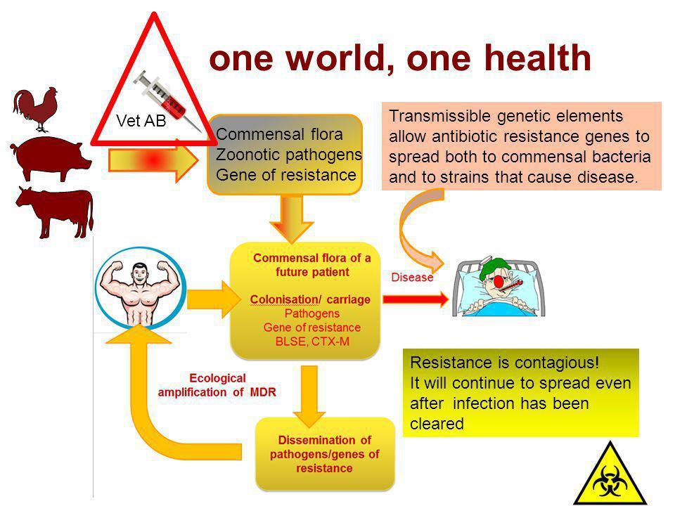 one world, one health