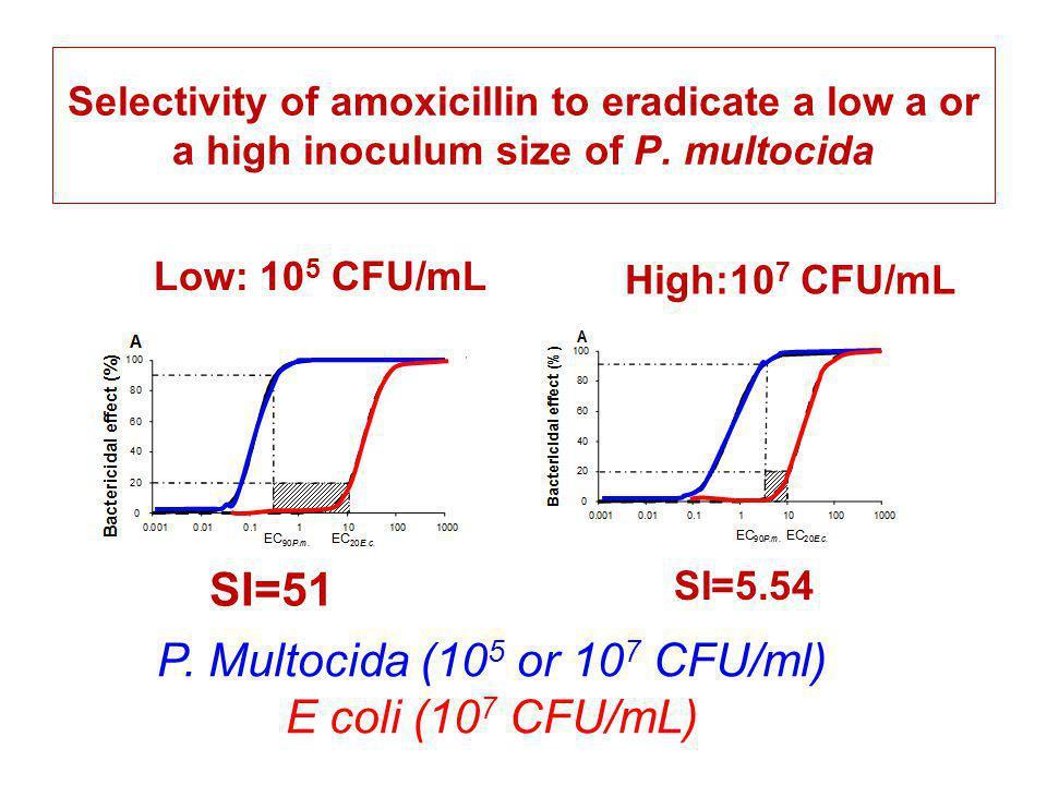 P. Multocida (105 or 107 CFU/ml)