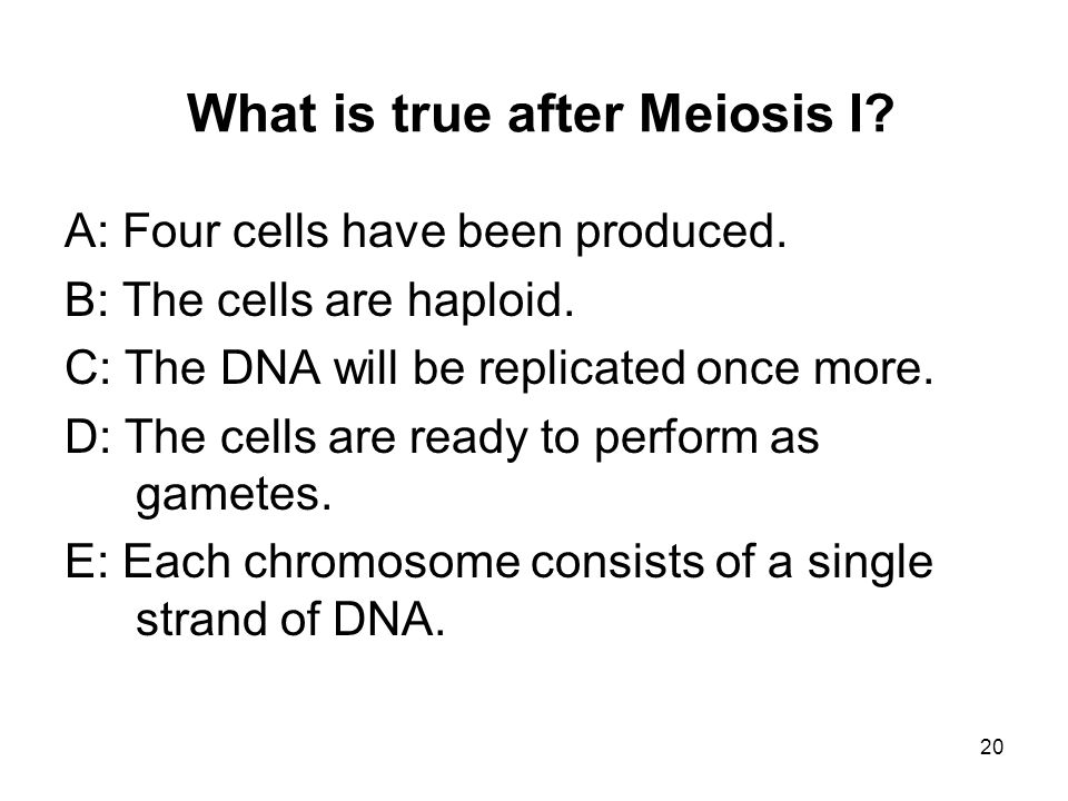 What is true after Meiosis I