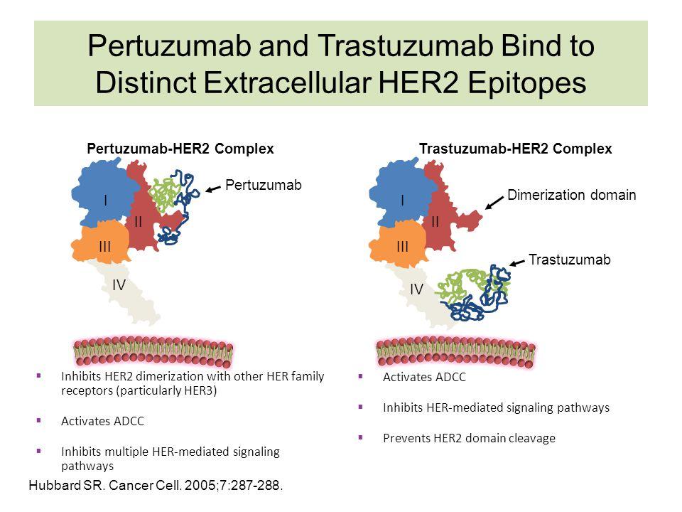 Pertuzumab-HER2 Complex Trastuzumab-HER2 Complex