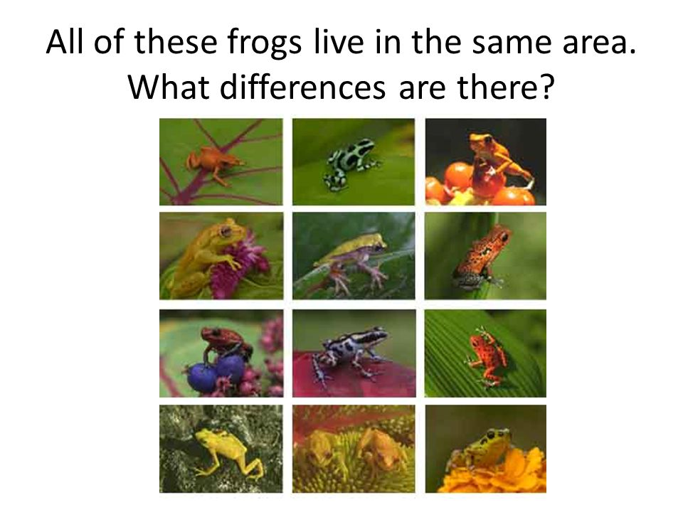 All of these frogs live in the same area. What differences are there