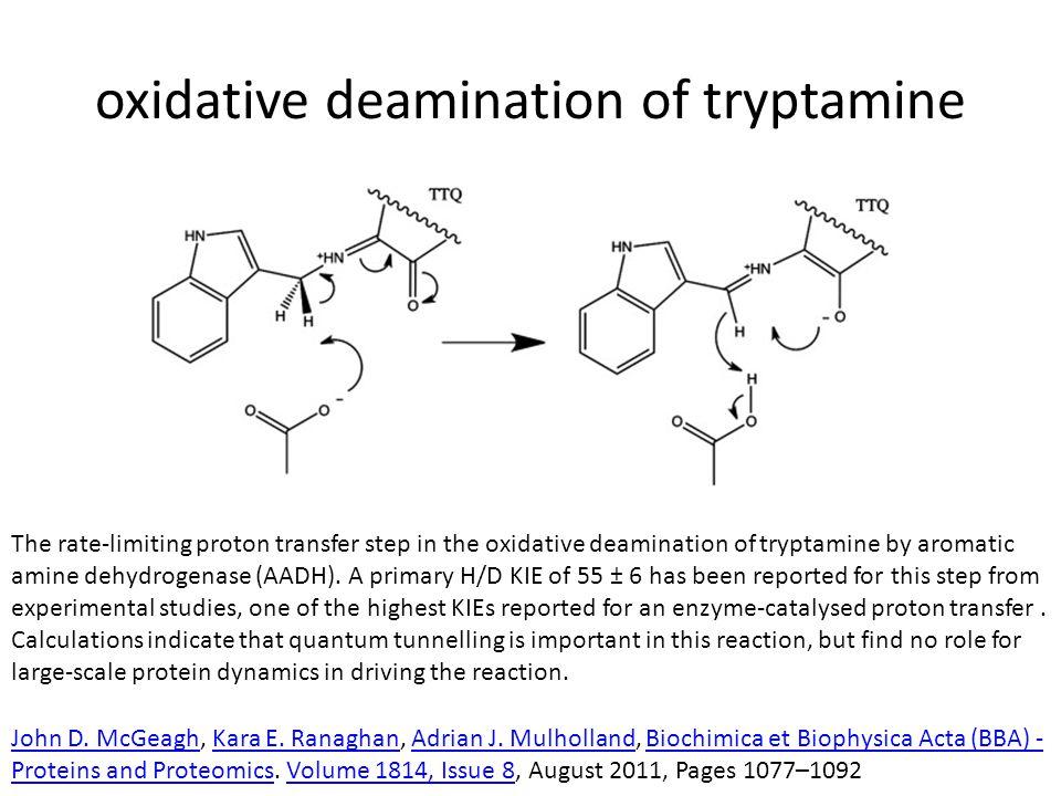 oxidative deamination of tryptamine