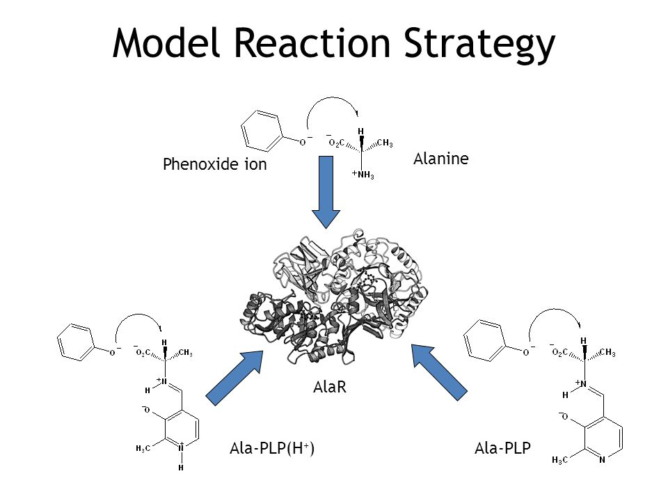 Model Reaction Strategy