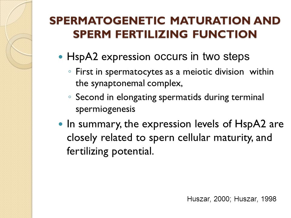 SPERMATOGENETIC MATURATION AND SPERM FERTILIZING FUNCTION