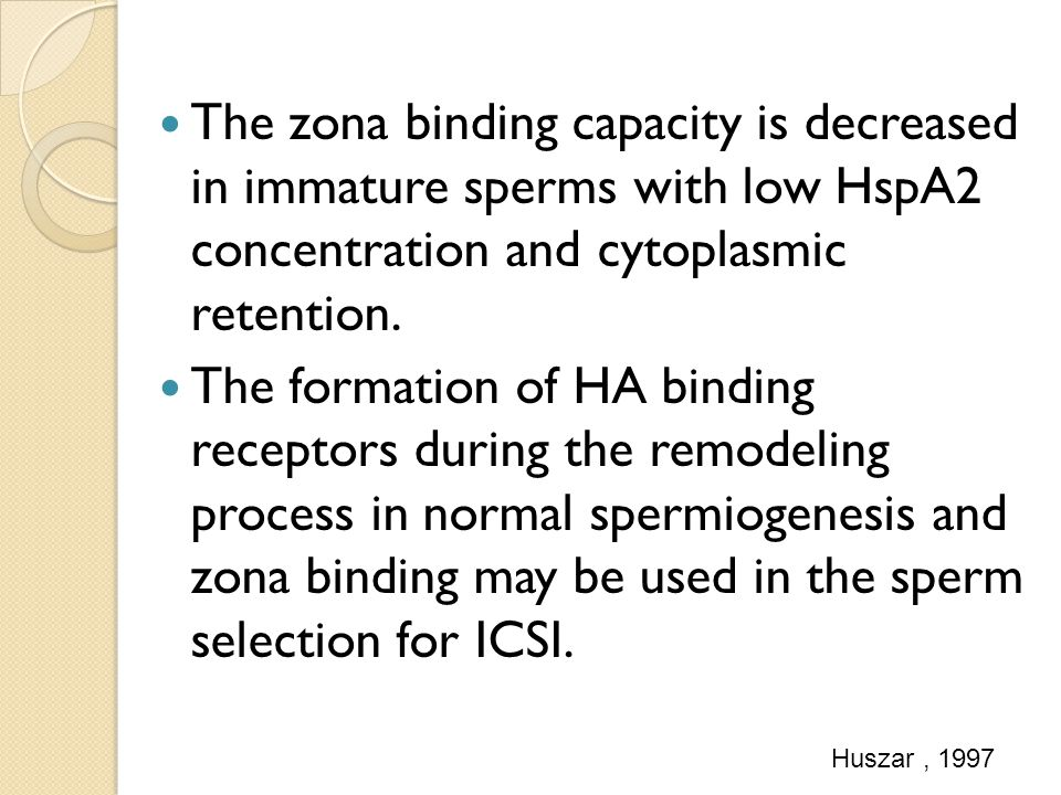 The zona binding capacity is decreased in immature sperms with low HspA2 concentration and cytoplasmic retention.