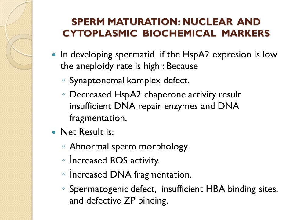 SPERM MATURATION: NUCLEAR AND CYTOPLASMIC BIOCHEMICAL MARKERS