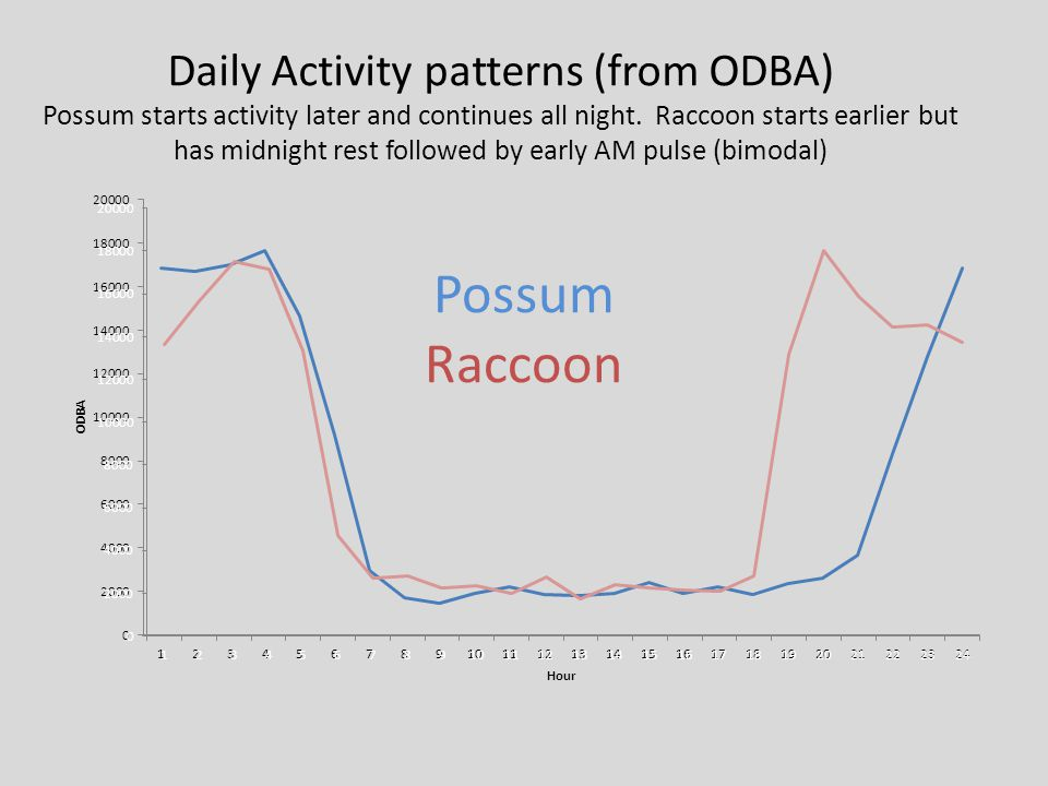 Daily Activity patterns (from ODBA)