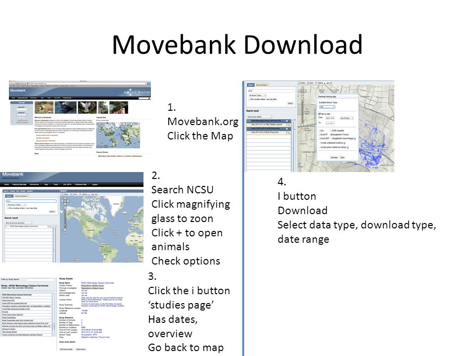 Movebank Download 1. Movebank.org Click the Map 2. Search NCSU 4.