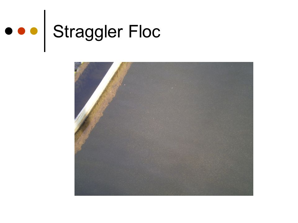 Straggler Floc
