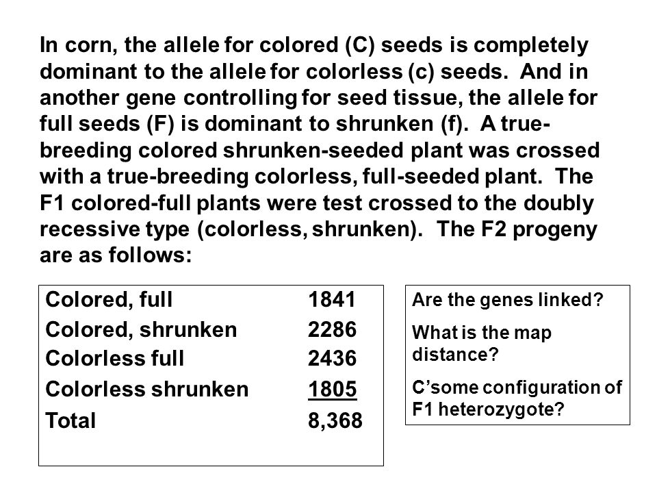 In corn, the allele for colored (C) seeds is completely dominant to the allele for colorless (c) seeds. And in another gene controlling for seed tissue, the allele for full seeds (F) is dominant to shrunken (f). A true-breeding colored shrunken-seeded plant was crossed with a true-breeding colorless, full-seeded plant. The F1 colored-full plants were test crossed to the doubly recessive type (colorless, shrunken). The F2 progeny are as follows: