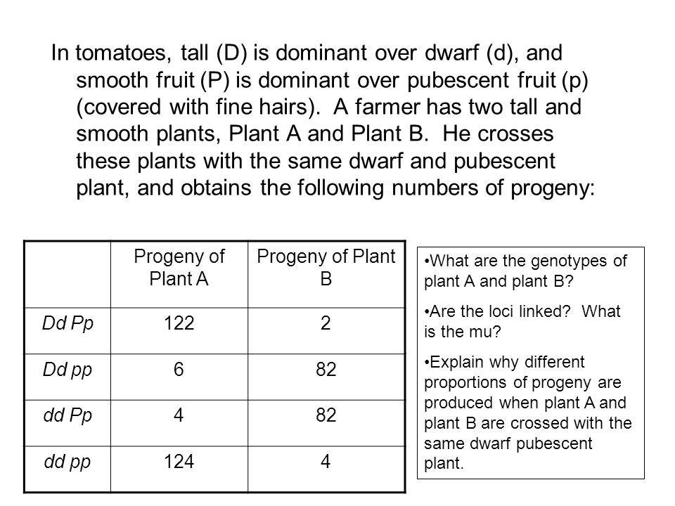 In tomatoes, tall (D) is dominant over dwarf (d), and smooth fruit (P) is dominant over pubescent fruit (p) (covered with fine hairs). A farmer has two tall and smooth plants, Plant A and Plant B. He crosses these plants with the same dwarf and pubescent plant, and obtains the following numbers of progeny: