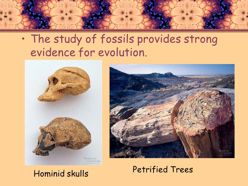 The study of fossils provides strong evidence for evolution.