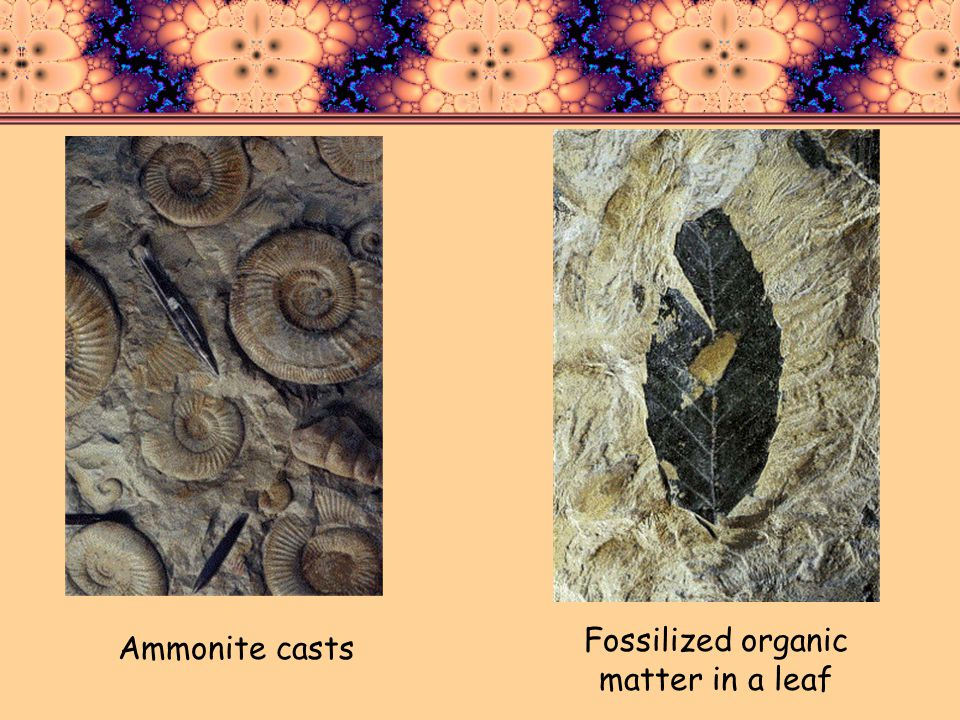Fossilized organic matter in a leaf