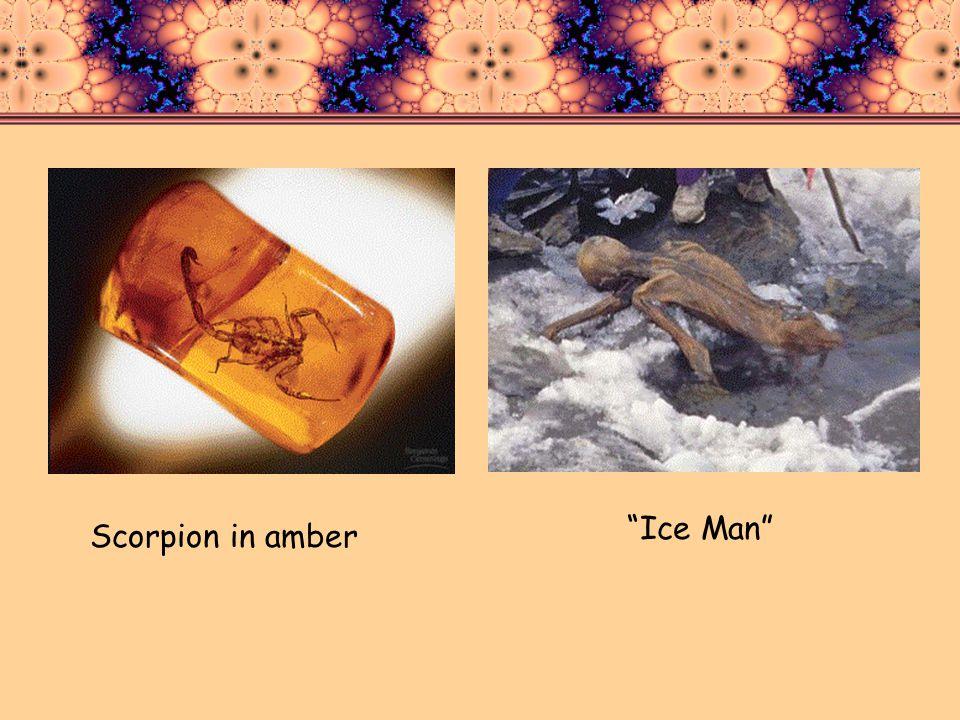 Ice Man Scorpion in amber