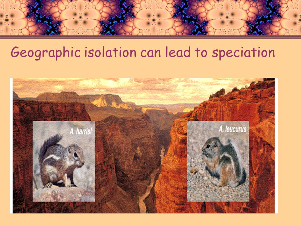 Geographic isolation can lead to speciation
