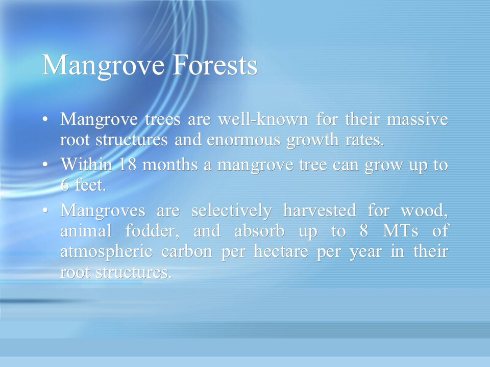 Mangrove Forests Mangrove trees are well-known for their massive root structures and enormous growth rates.