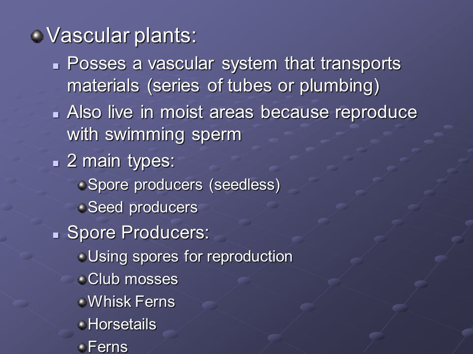 Vascular plants: Posses a vascular system that transports materials (series of tubes or plumbing)