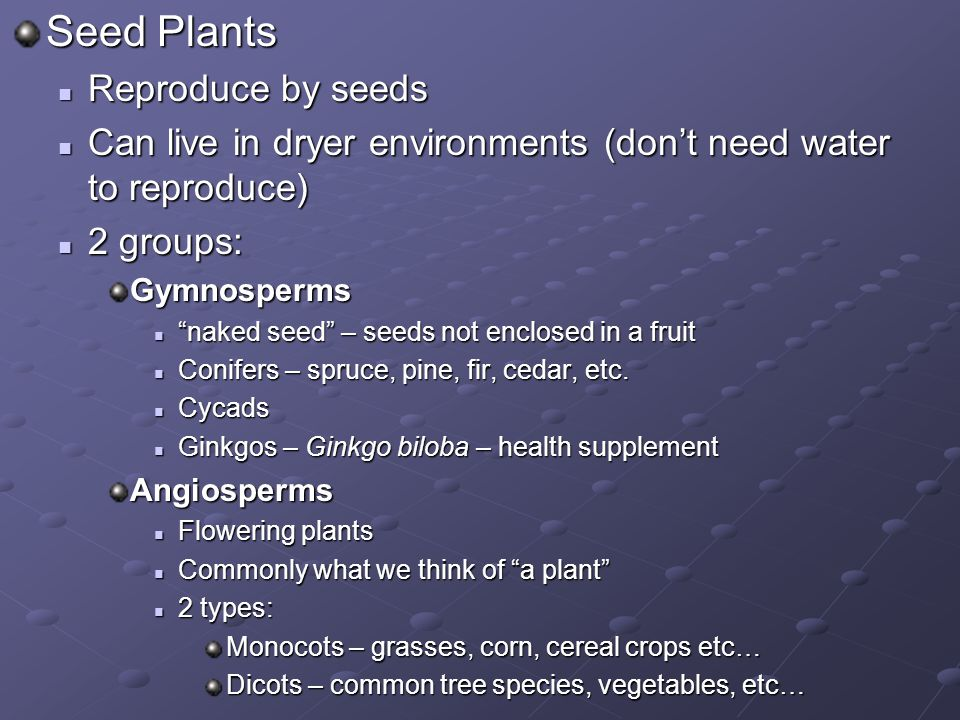 Seed Plants Reproduce by seeds