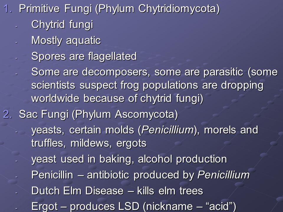 Primitive Fungi (Phylum Chytridiomycota)
