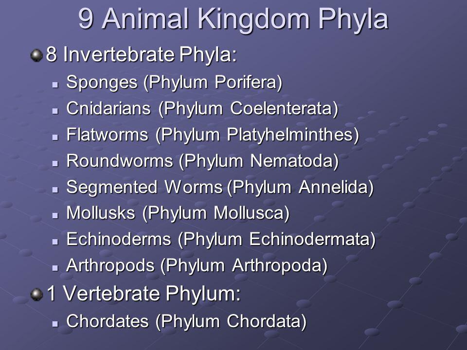 9 Animal Kingdom Phyla 8 Invertebrate Phyla: 1 Vertebrate Phylum: